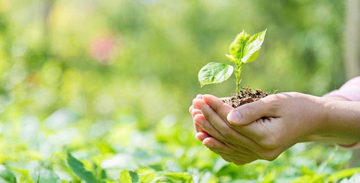 Certificados de Cumplimento Ambiental